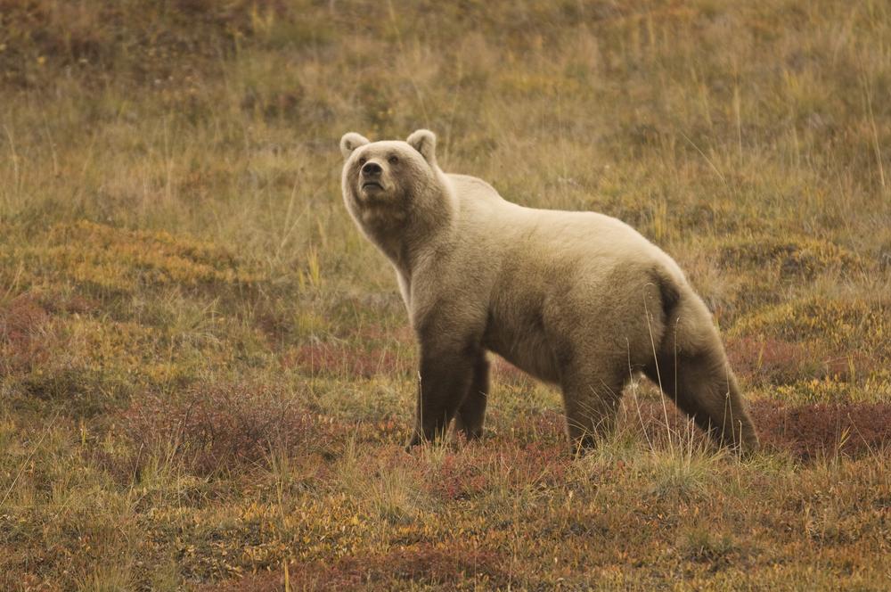 Denali Nemzeti Park és Vadrezervátum
