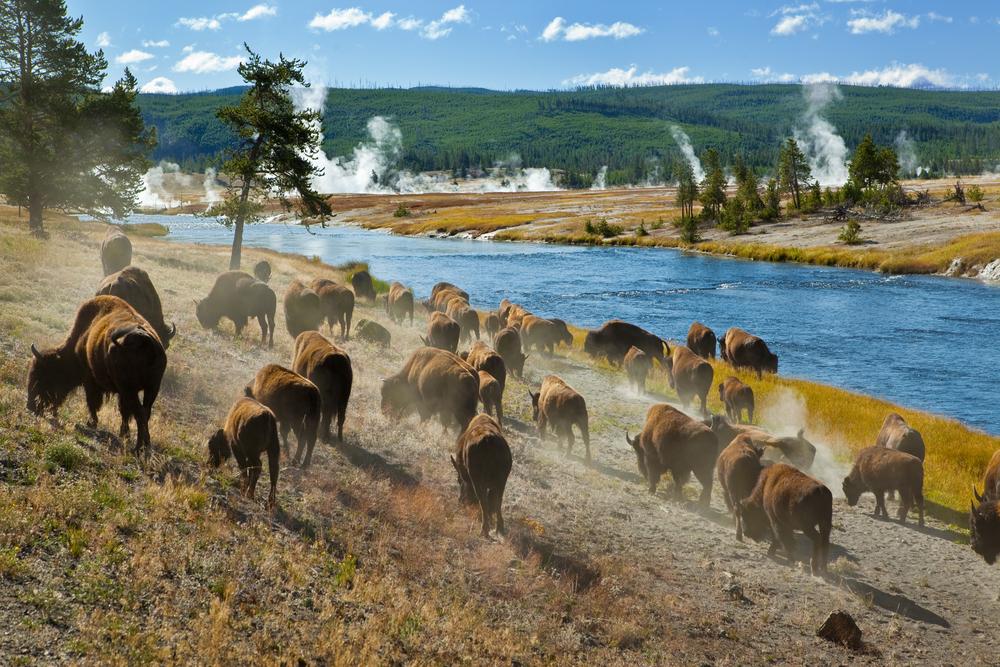 Yellowstone Nemzeti Park Kalauz
